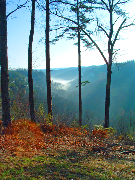 Overlook in the Red River Gorge, Kentucky